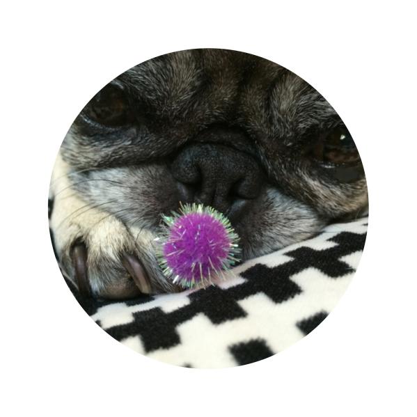 Liza Rose - Studio Pug Extraordinaire